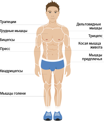 Front Anatomy