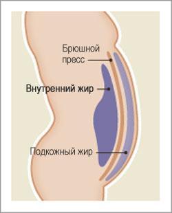 внутренний жир зожник