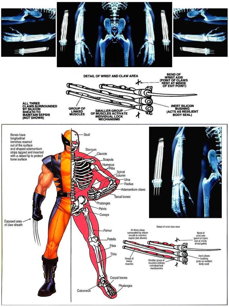 Wolverines Adamantium Skeleton 2