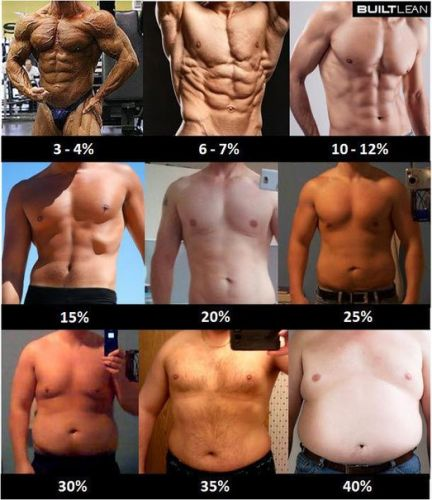 процент жира на животе фото