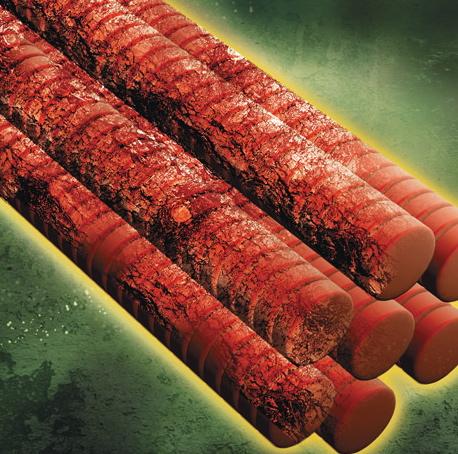 muscle-fiber