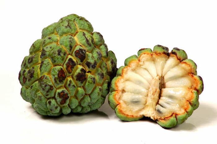 24_custard-apple-1__700