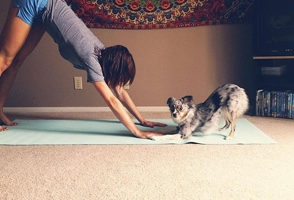 funny-animals-doing-yoga-8