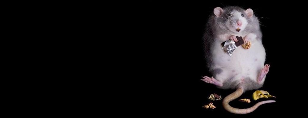 мышка сладккая