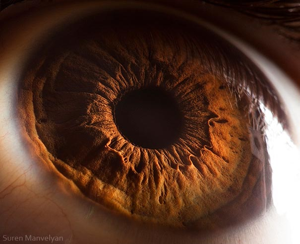 eye-macro-photo-13