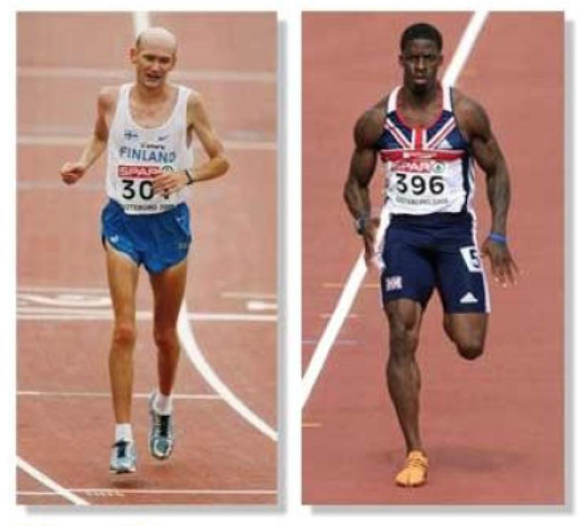 Тела бегунов на очень длинные (аэробные тренировки) и очень короткие (анаэробные тренировки) дистанции