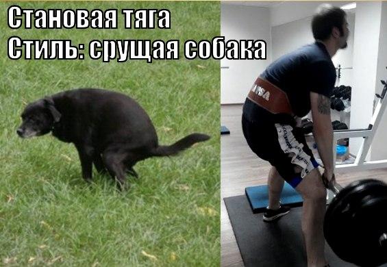 срущая собака