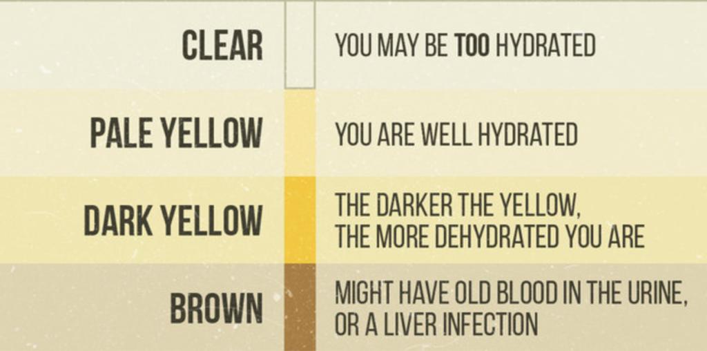 Водный баланс: сколько воды нужно пить и как часто - Зожник