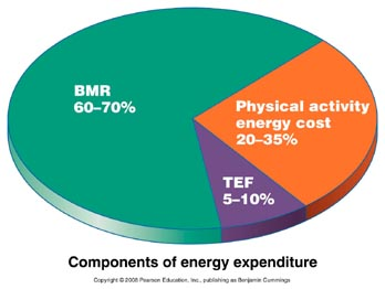 Components_energy_expenditure
