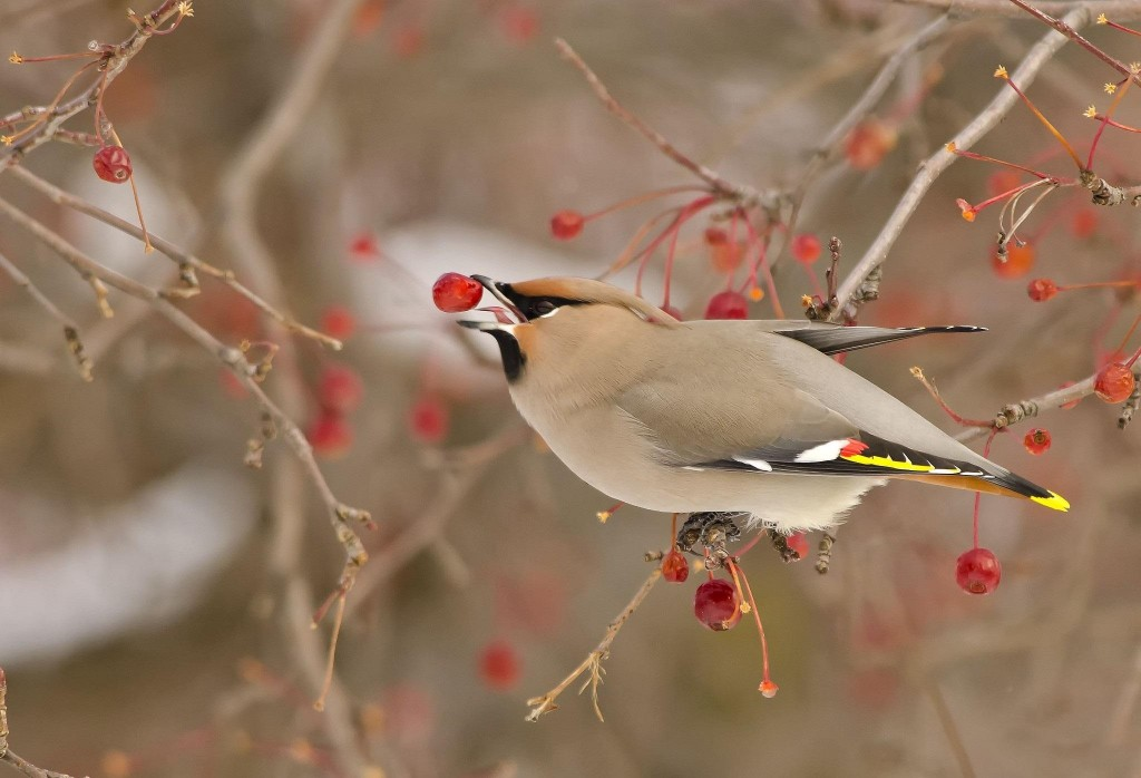 bird_on_winter_time