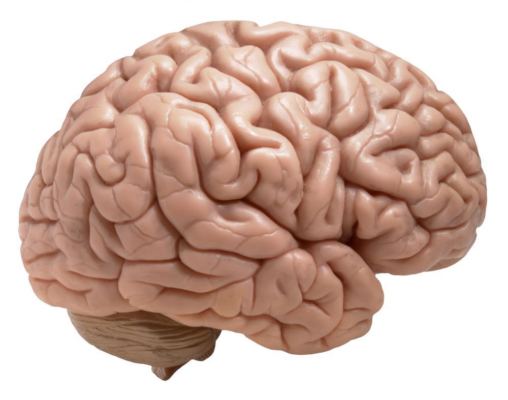 Brain zozhnik
