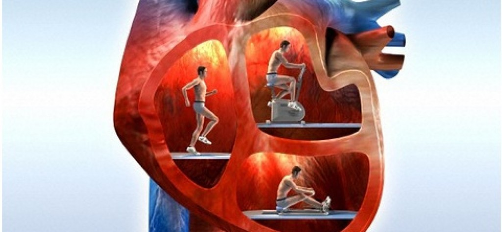 польза физической нагрузки для сердца
