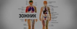 Гид_по_Зожнику