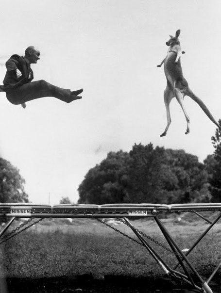 Изобретатель батута Джордж Ниссен прыгает на своем детище с кенгуру. США, 1960