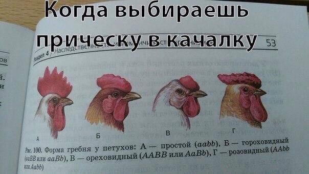 беговой_юмор24