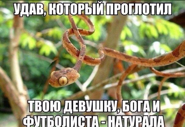 беговой_юмор25