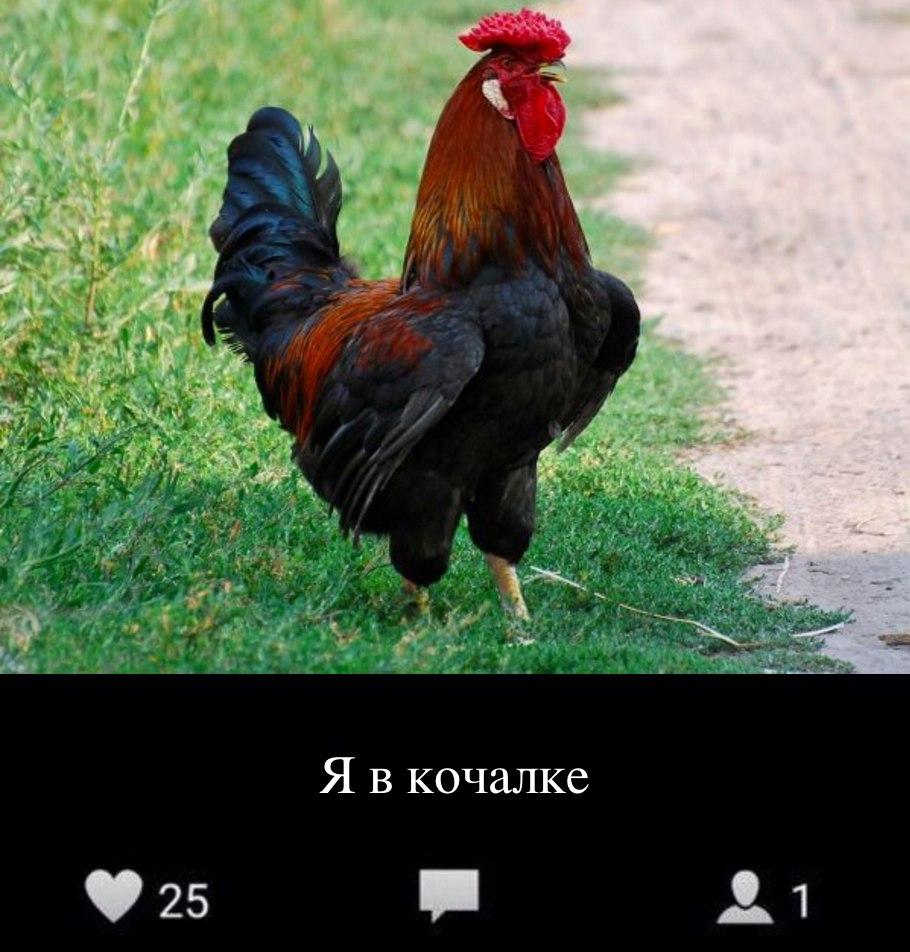 беговой_юмор29