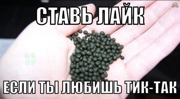 беговой_юмор4