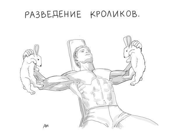 кролики-тренировка-песочница-460503
