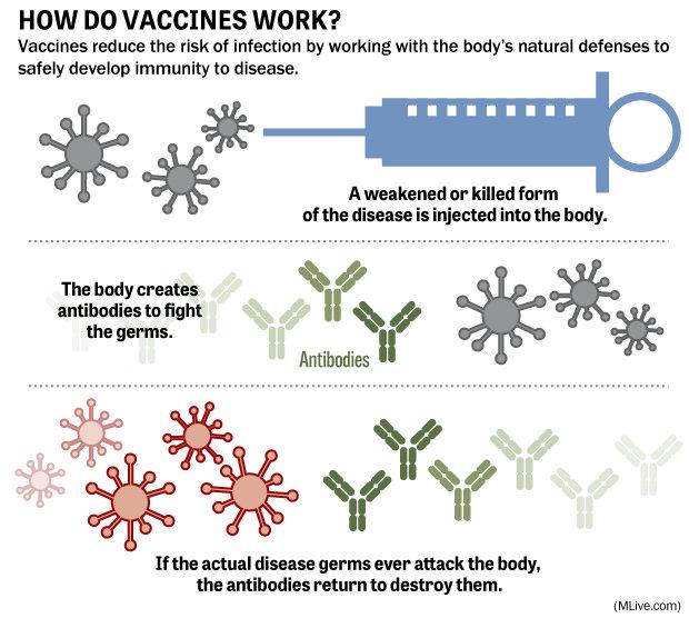 how-vaccines-workjpg-4124fe097a13d163