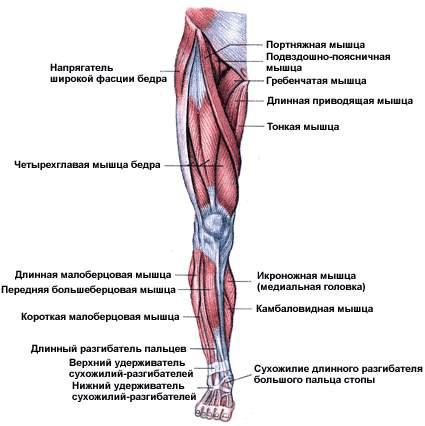 Leg_front