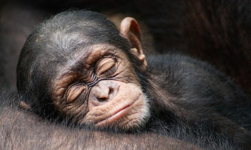 animales-dormilones-4
