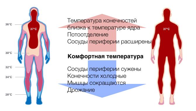 termoreguljacija-temperatura-tela