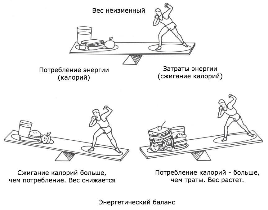 06b07b962413 Энергетический баланс - базовый закон управления весом – Зожник ...