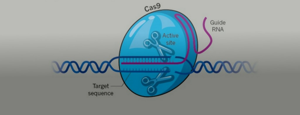 Редактирование генов человека: начало - Зожник