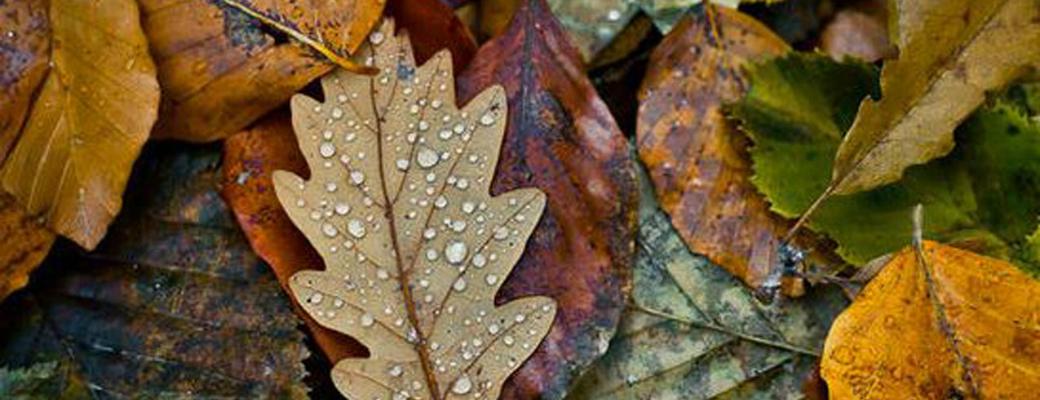 rain zozhnik insire