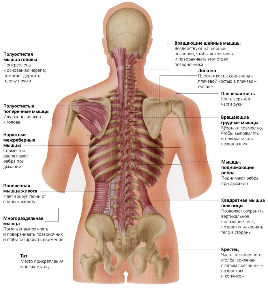 Почему болит спина при вдохе