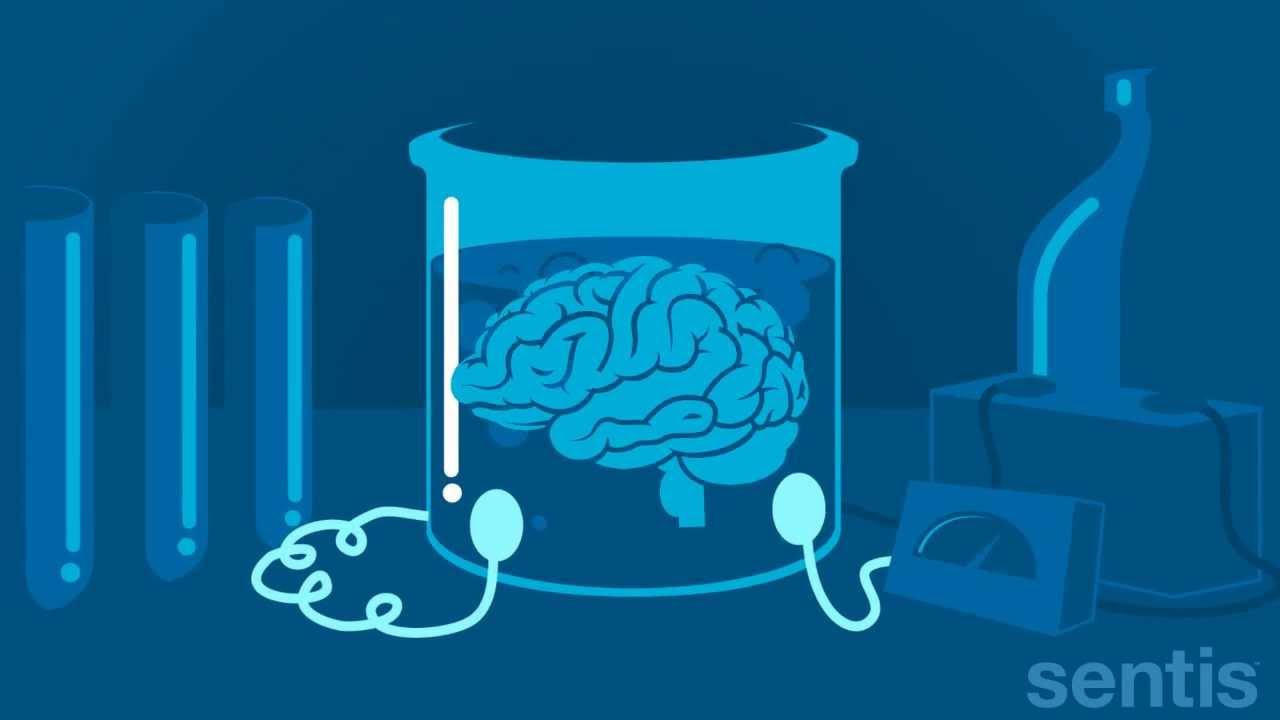 brain wwork