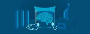 how brain work
