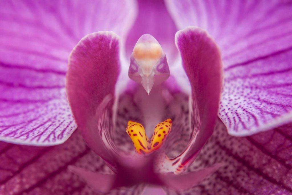 Цветок-орхидеи-zozhnik