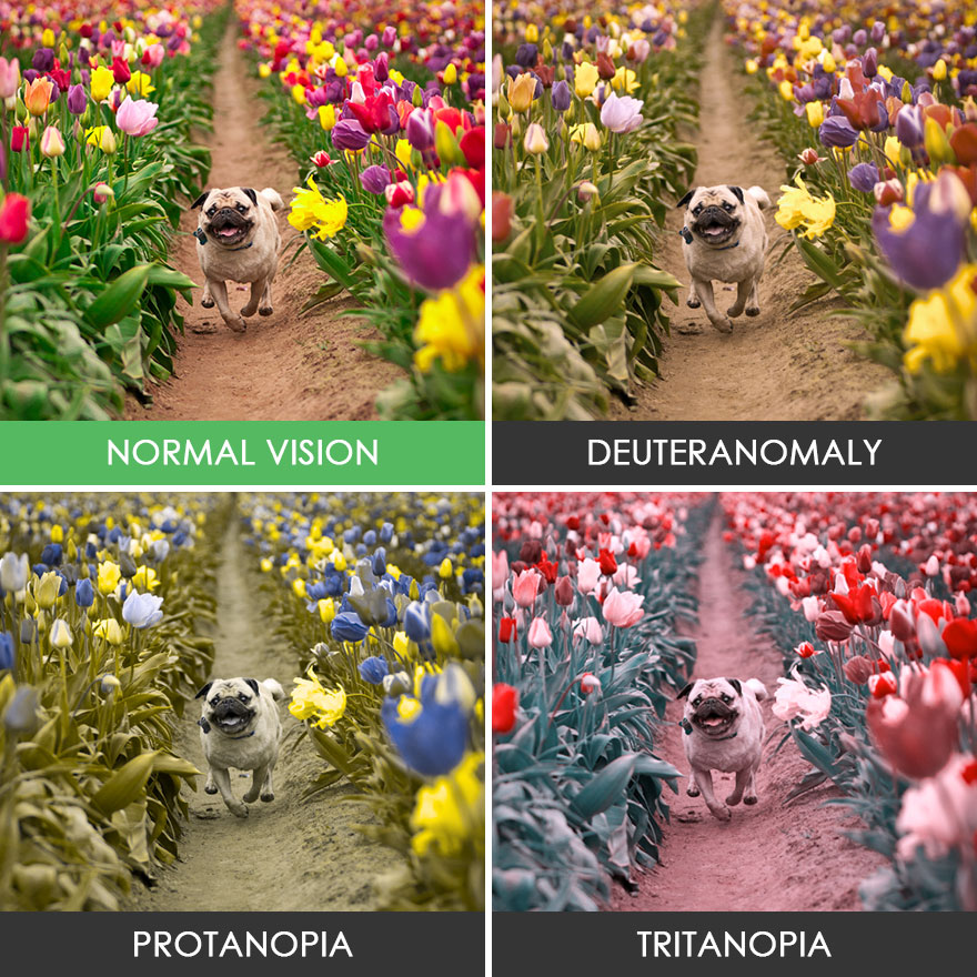 different-types-color-blindness-photos-41