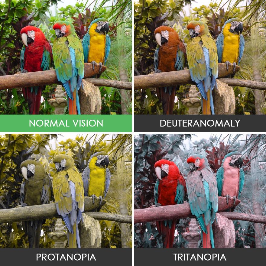 different-types-color-blindness-photos-52-58872e650e5eb__880