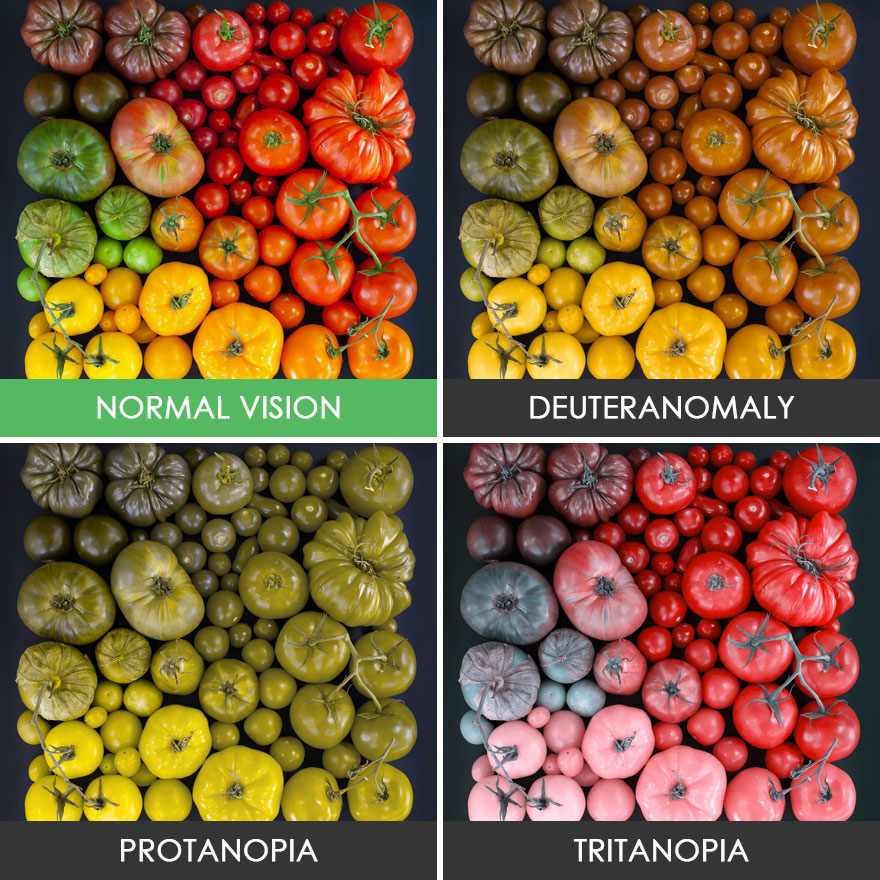different-types-color-blindness-photos-62-5887523b862cb__880