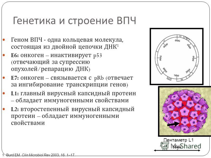 Вирус папилломы обозначение