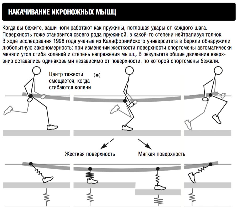 ff45347f2c31 Этот результат был поставлен под сомнение в 2010 году  бразильские ученые  установили, что, когда человек бежит по асфальту, на каждое касание ногой  земли ...