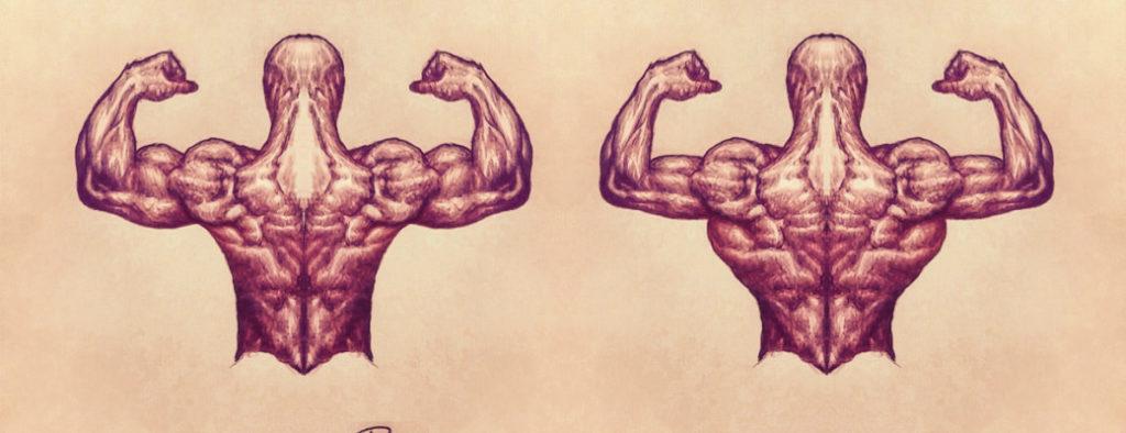 Частота тренировок на одну группу мышц