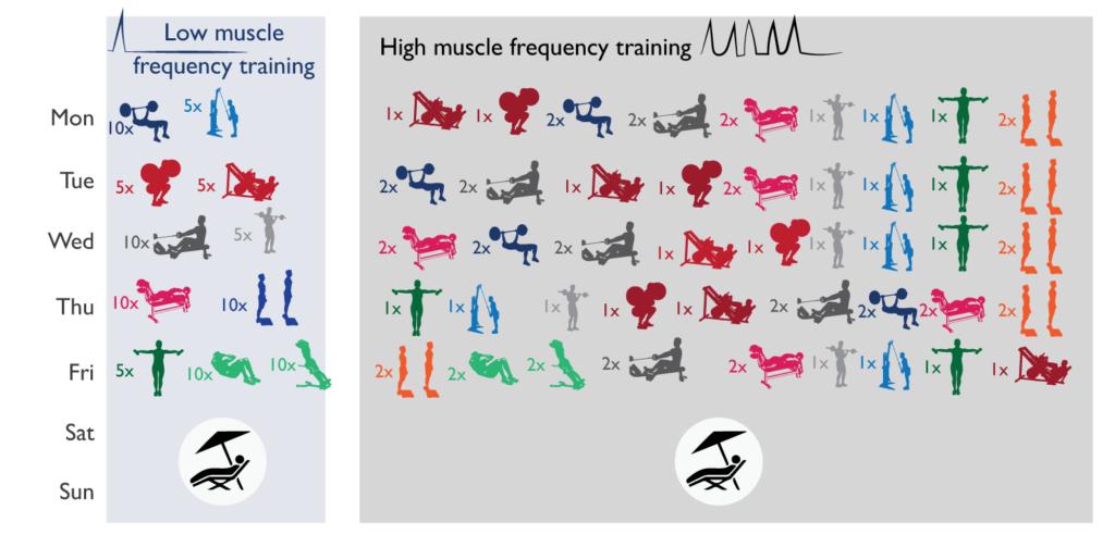Частота тренировок на одну группу мышц thumbnail