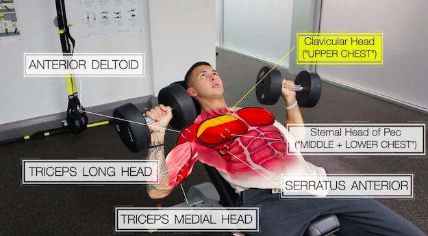 Программа тренировок для мышц груди